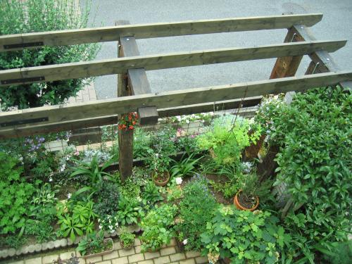 garden 021_convert_20080819105724