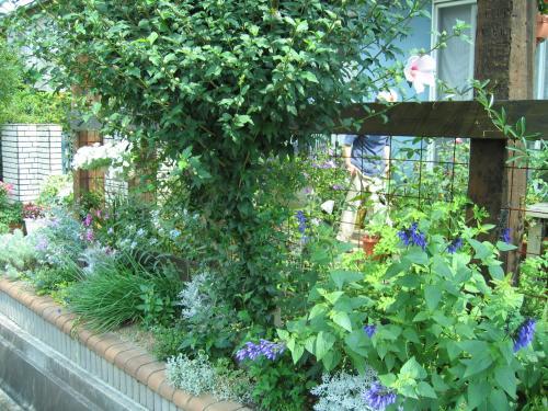 garden 042_convert_20080821163435