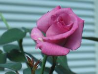 garden+001_convert_20080908175159.jpg