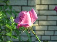 garden+016_convert_20080908174754.jpg