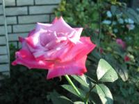 garden+019_convert_20080908175624.jpg