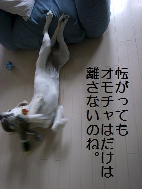 _0010558.jpg