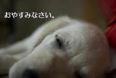 _IGP5780.jpg