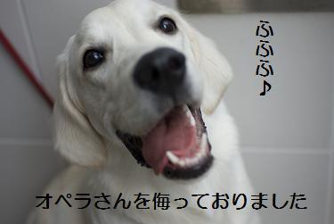 _IGP6010.jpg