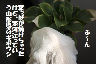 _IGP6142.jpg