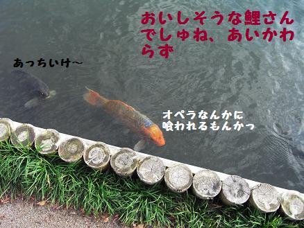 おいしそうな鯉