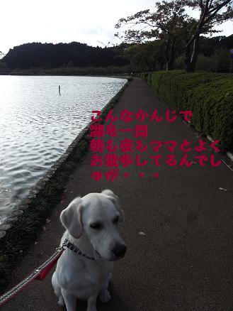 よくお散歩してます