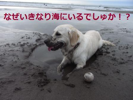 いきなり海