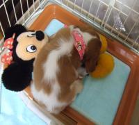 ミニーちゃんはあたしの枕