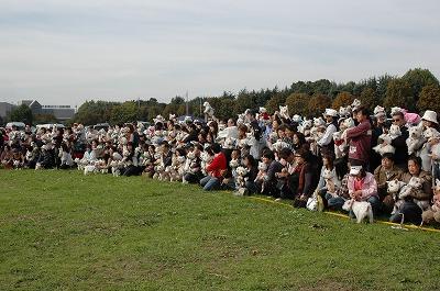 2008.11.2-17