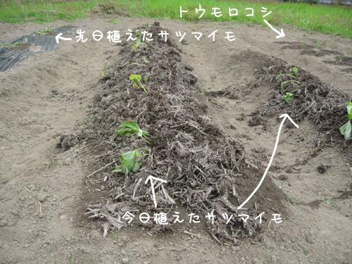 6_4_1.jpg