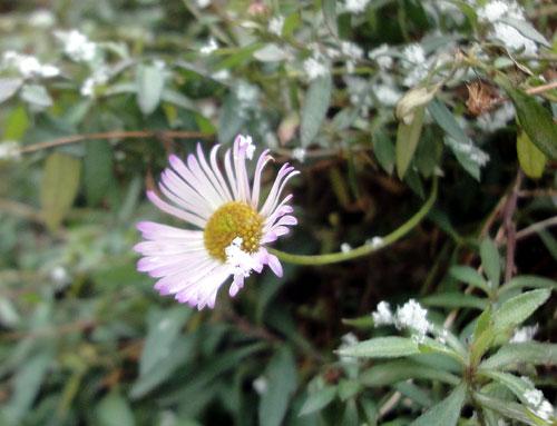 雪に耐える花