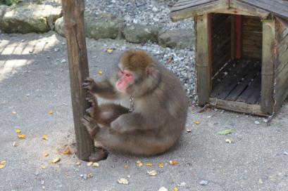 お猿さんがいました
