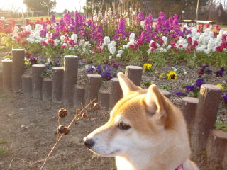 花壇の前で