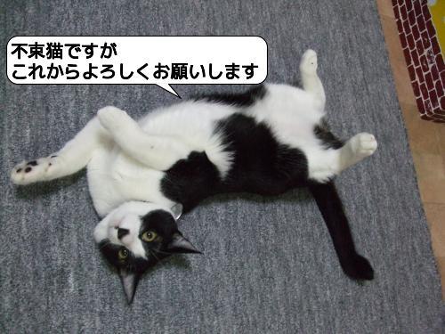 yama.jpg