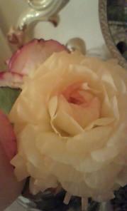 白ピンク花