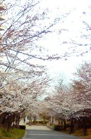 4月4日遊歩道