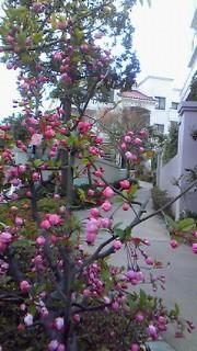4月4日植栽