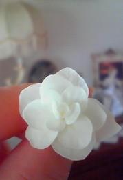 4月13日 白い花