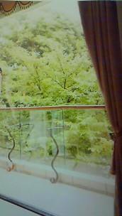 4月29日 窓&グリーン