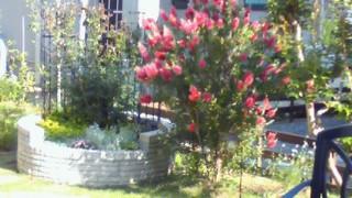5月20日 えみブラシの木横