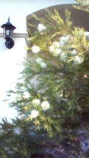 6月12日 きよちゃんの木