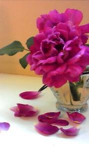 6月24日 マーベリックの薔薇