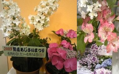 090610-odawara1