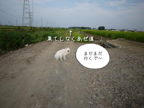 P1060464.jpg