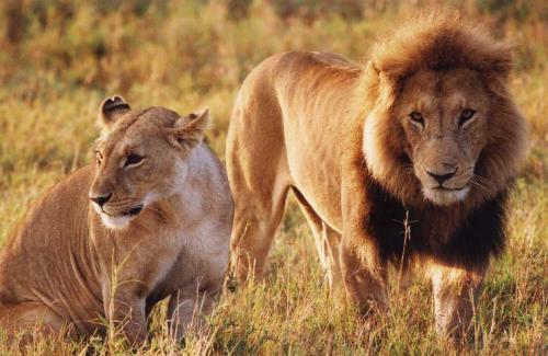Lions[1]_convert_20081029095959