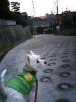 朝の散歩1