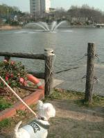 城山公園噴水
