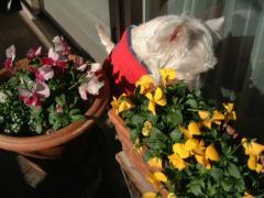 花を覗くパリス