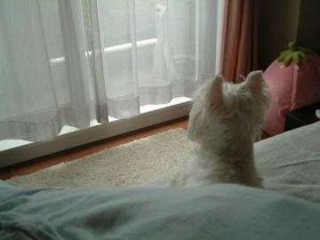 窓を眺める