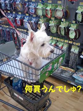 何買うの?