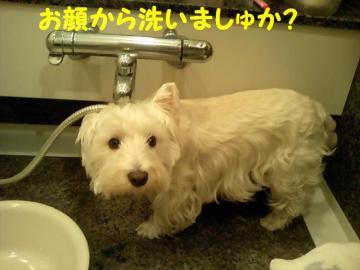 お顔から洗う☆
