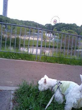 お池周りをお散歩