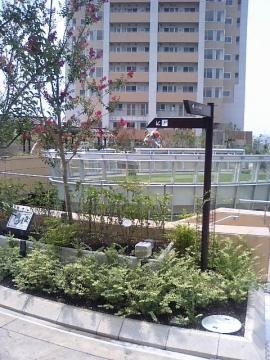 ガーデン④