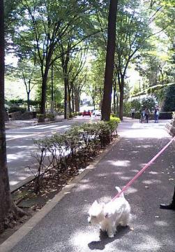 並木道を散歩