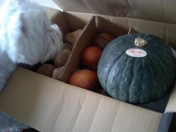 じゃがいも・玉ねぎ・かぼちゃ