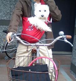 自転車乗るの