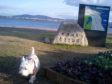 琵琶湖だよ~