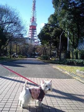 タワーの見える公園