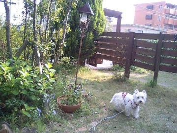 ガーデン①