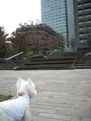 公園②.JPG
