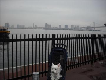 日の出桟橋①.JPG