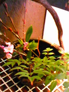 0903和風喫茶お花
