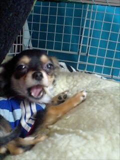 090301司の彼女の犬ニャン