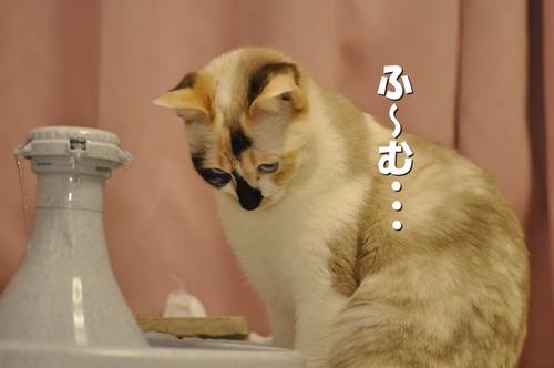 006_20120405230652.jpg