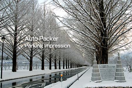 マキノ メタセコイア並木の雪景色